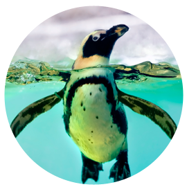 Module Ten Penguins 1
