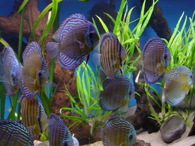 E-Aquarium Conference 2020