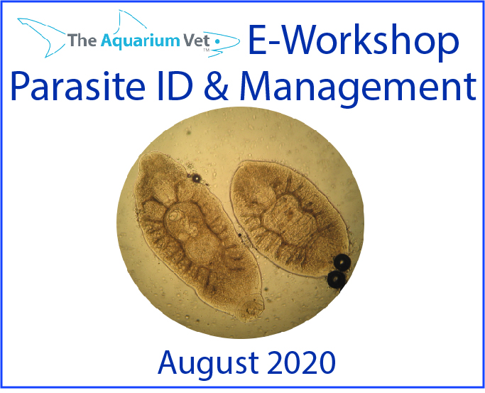 The Aquarium Vet E-Workshop – Fish Parasites & their Management